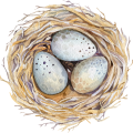 uploads nest nest PNG54 19