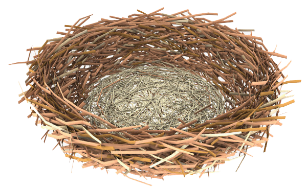 uploads nest nest PNG58 5