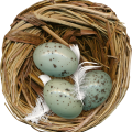 uploads nest nest PNG59 14