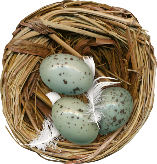 uploads nest nest PNG59 4