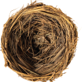 uploads nest nest PNG6 20