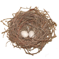uploads nest nest PNG60 22