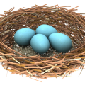 uploads nest nest PNG62 17