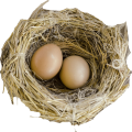uploads nest nest PNG63 23