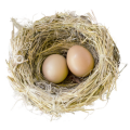 uploads nest nest PNG64 8