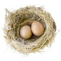 uploads nest nest PNG65 25