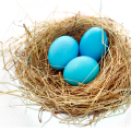 uploads nest nest PNG66 8