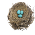 uploads nest nest PNG67 19