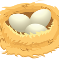 uploads nest nest PNG7 8