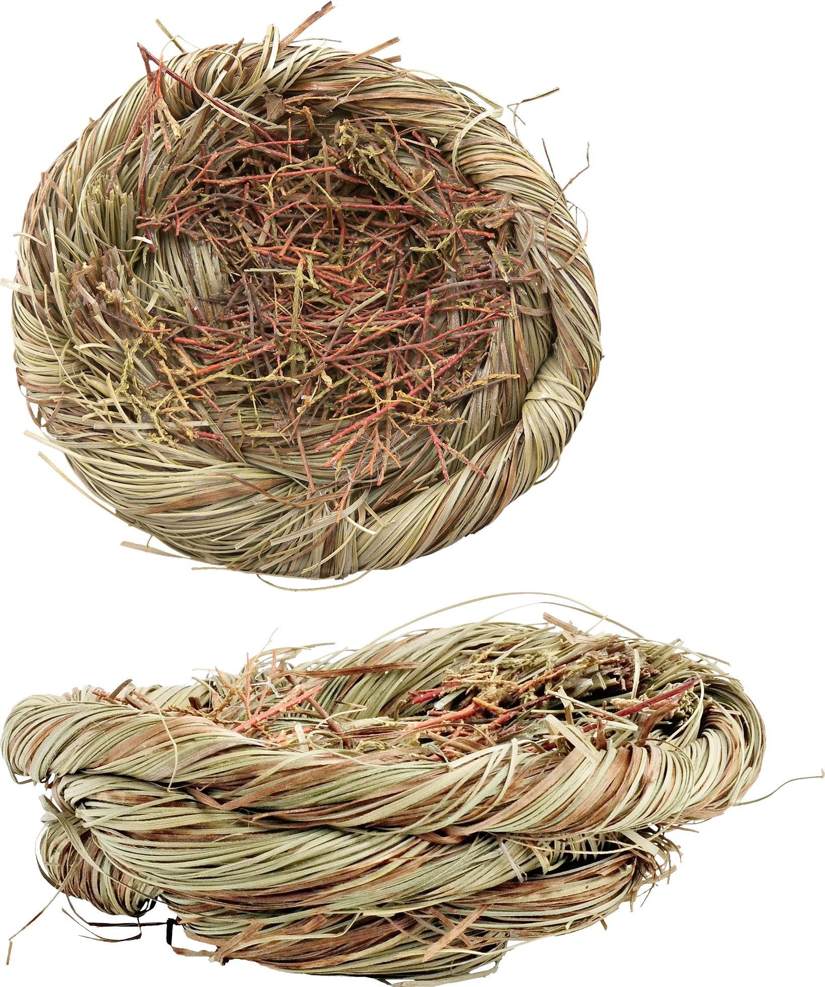 uploads nest nest PNG8 3