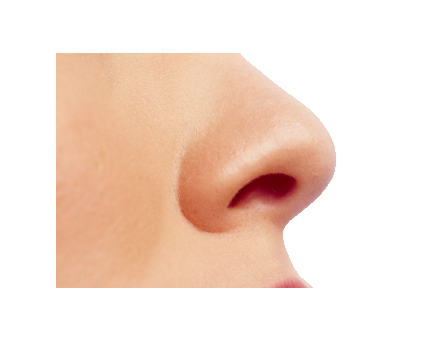 uploads nose nose PNG19 4