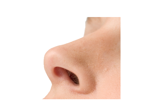 uploads nose nose PNG21 86