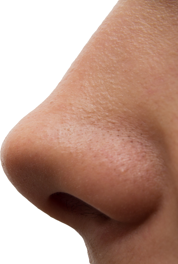 uploads nose nose PNG25 43