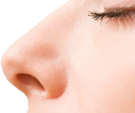 uploads nose nose PNG29 86