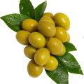 uploads olives olives PNG14268 19