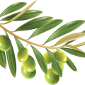 uploads olives olives PNG14270 14