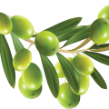 uploads olives olives PNG14273 19
