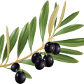 uploads olives olives PNG14278 18