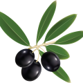 uploads olives olives PNG14279 8