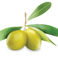 uploads olives olives PNG14284 23