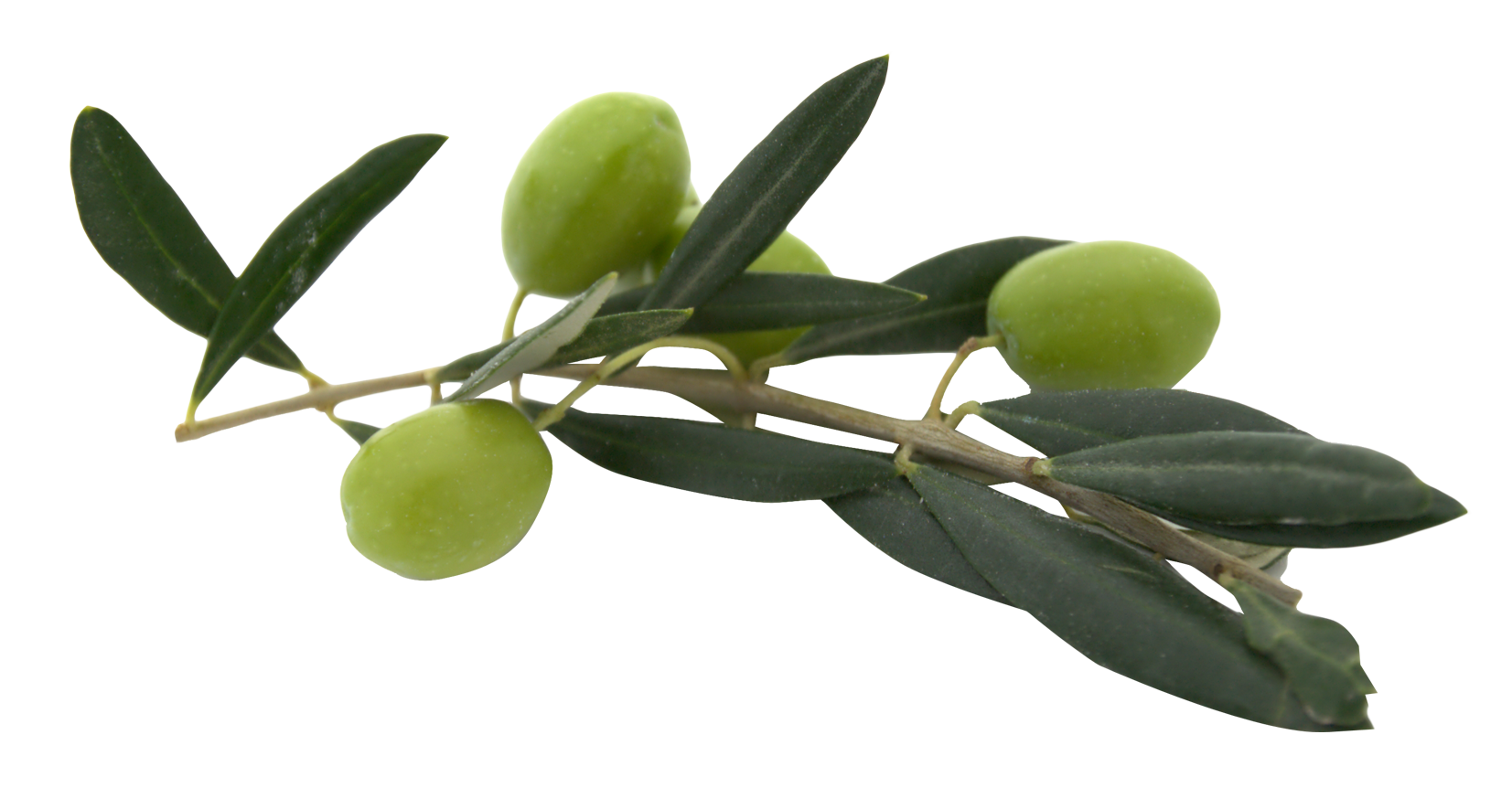 uploads olives olives PNG14288 3