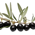 uploads olives olives PNG14290 19