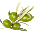 uploads olives olives PNG14291 10