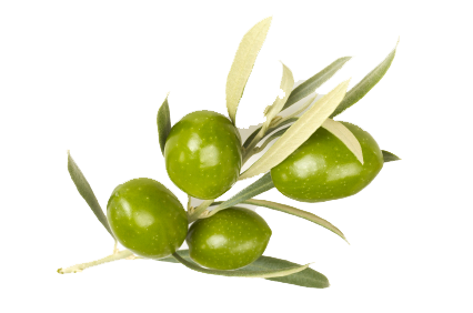 uploads olives olives PNG14291 3
