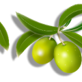 uploads olives olives PNG14292 10
