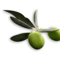 uploads olives olives PNG14295 17