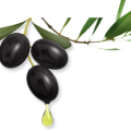 uploads olives olives PNG14298 7