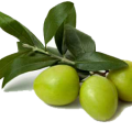 uploads olives olives PNG14300 25