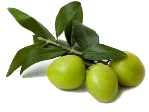 uploads olives olives PNG14300 86