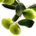 uploads olives olives PNG14301 20
