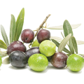 uploads olives olives PNG14303 14