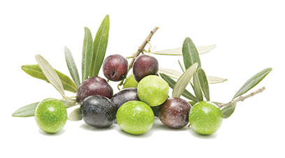 uploads olives olives PNG14303 5