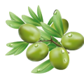 uploads olives olives PNG14304 18