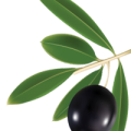 uploads olives olives PNG14305 9