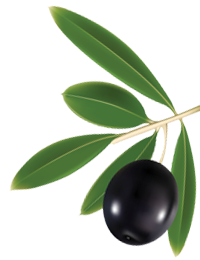 uploads olives olives PNG14305 4