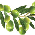 uploads olives olives PNG14309 8