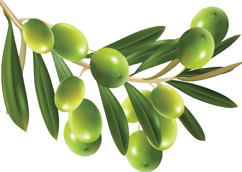 uploads olives olives PNG14309 3