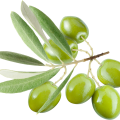 uploads olives olives PNG14310 19