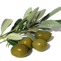 uploads olives olives PNG14311 13
