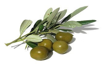uploads olives olives PNG14311 5
