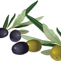 uploads olives olives PNG14314 25