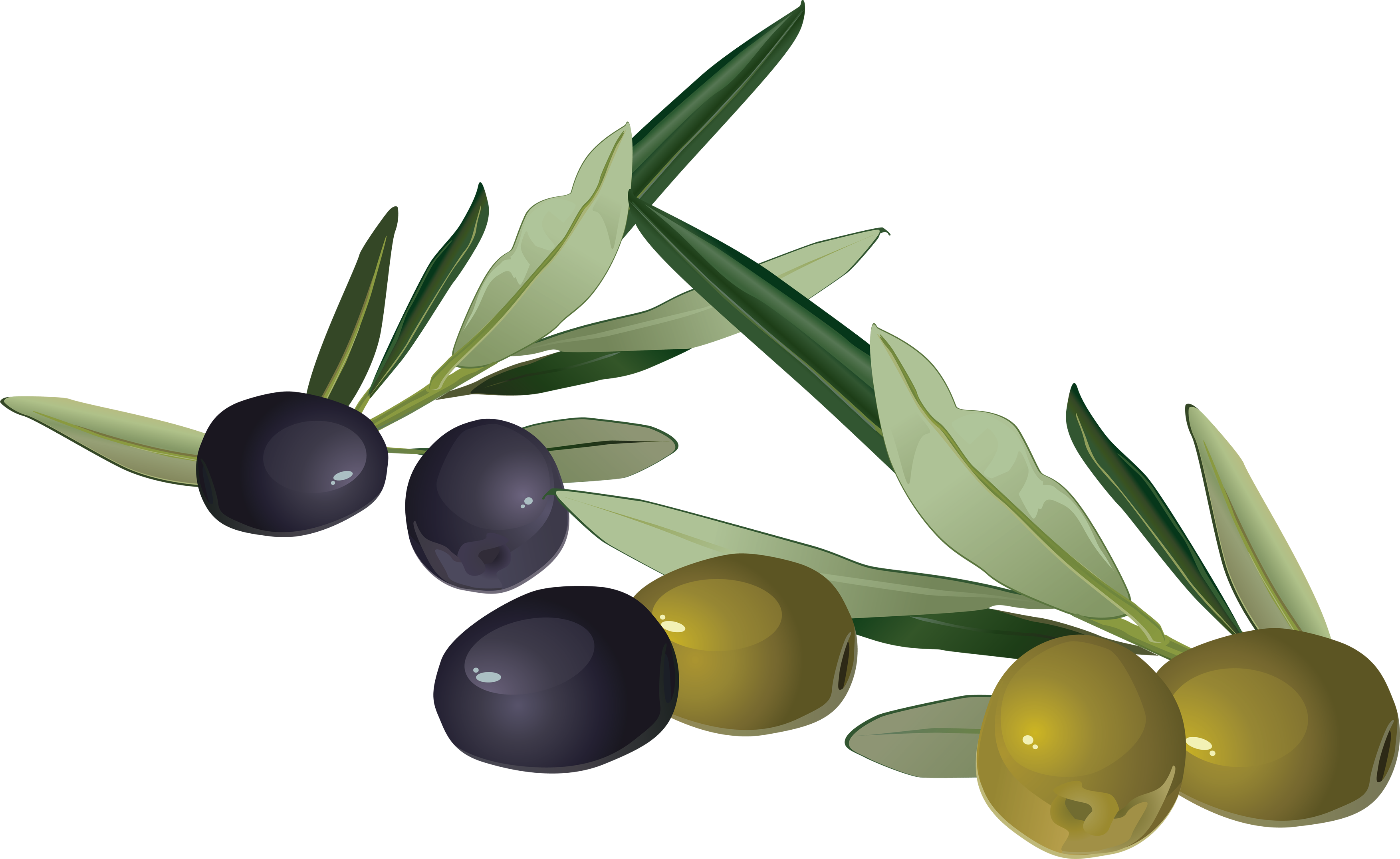 uploads olives olives PNG14314 3