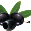 uploads olives olives PNG14316 14