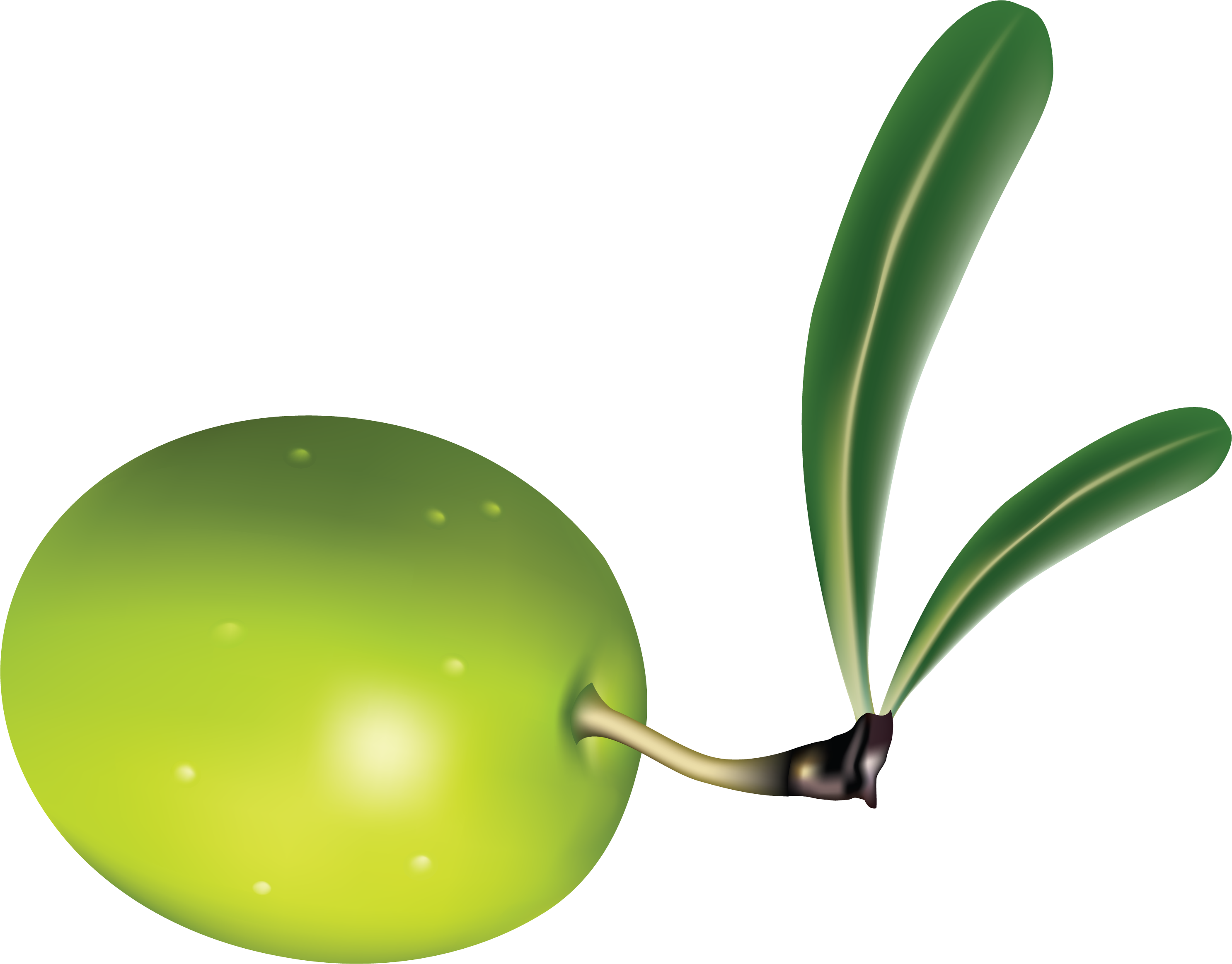 uploads olives olives PNG14321 5