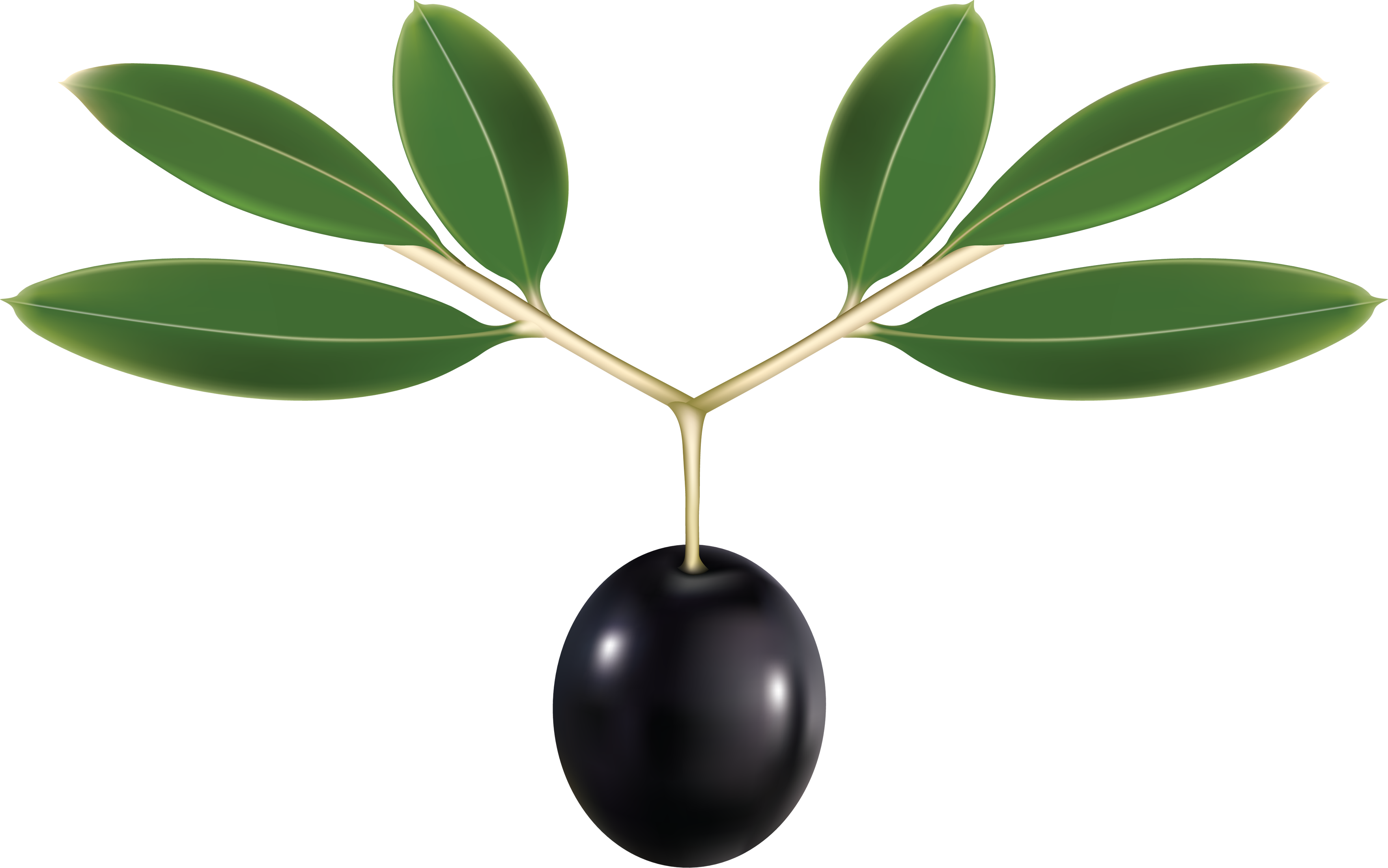 uploads olives olives PNG14323 3