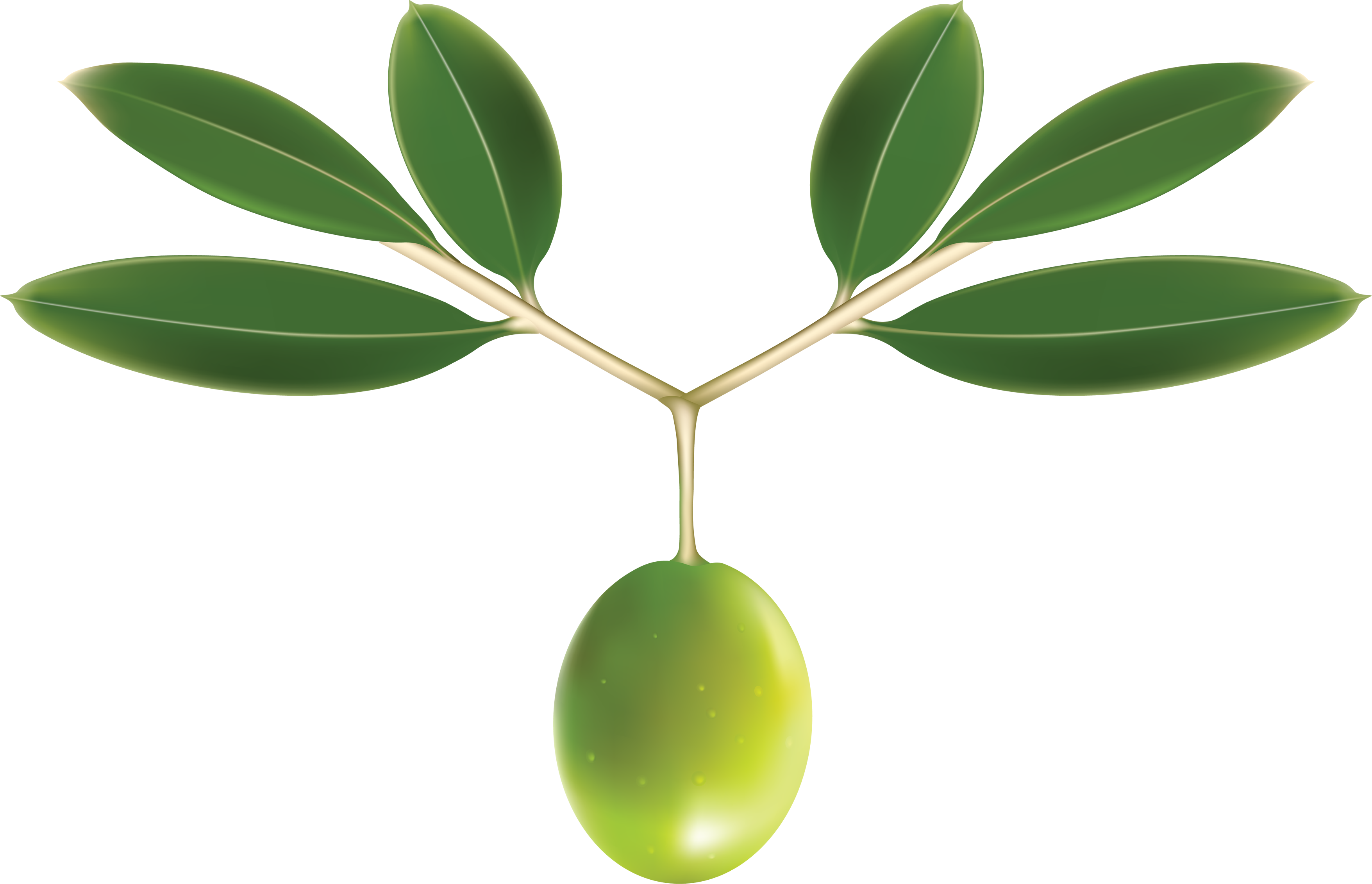 uploads olives olives PNG14324 3